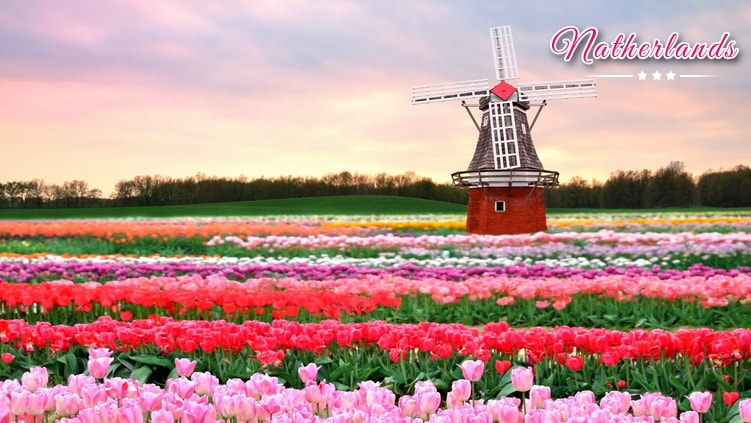 luxury netherlands holiday tour packages